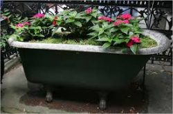Repurposed and reclaimed bathtub in use as outdoor planter.