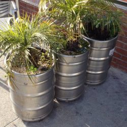 Beer barrels in use as planters.
