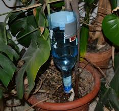 Watering plants with a dripping bottle.