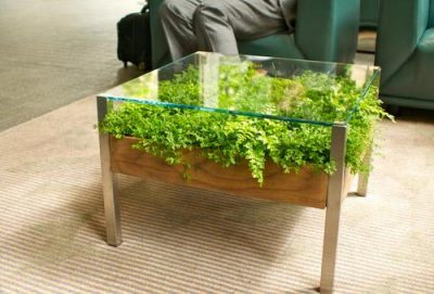 Plant bed under a glass tabletop of a homemade coffee table.