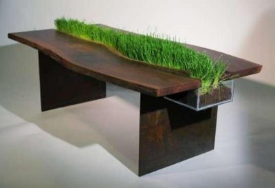 Grass growing from the center of a tabletop, as result of embedded perspex planter.