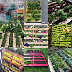 Living walls made from repurposed pallets.