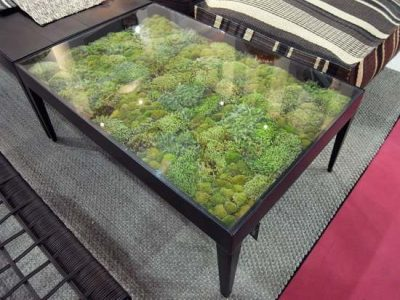 Succulents growing below the glass tabletop of a homemade lounge table.