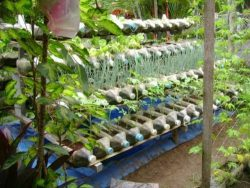 Cultivation system from plastic bottles with drippers.