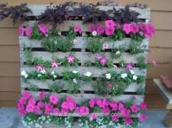 Planter made from repurposed pallet.