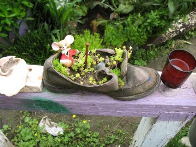 Mini garden made in an old sneaker.