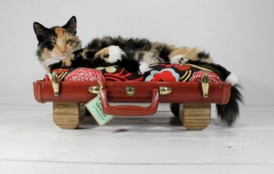 Reclaimed as a cat bed, old suitcases in uses as beds for pets.