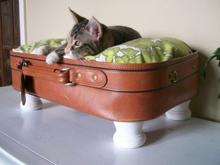 This cat has reclaimed a suitcase as its bed.