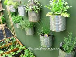 Food cans repurposed as planter pots hanging on the wall.