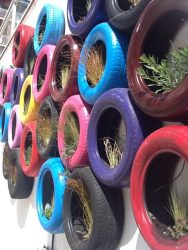 Repurposed and reclaimed tires in use as a wall garden.